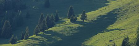 Green landscape in the Canton of Grisons, Switzerland. Forest in Obermutten. 免版税图像