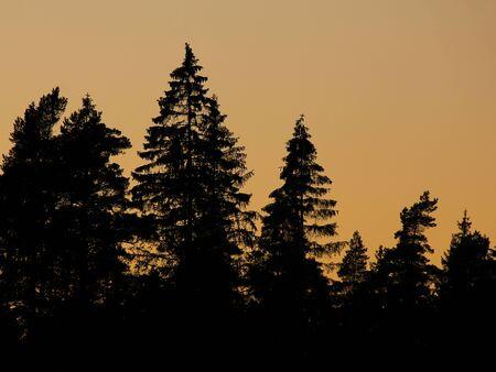 Umrisse von Bäumen in einem Wald bei Sonnenuntergang. Abendszene in Dalsland, Schweden. Standard-Bild