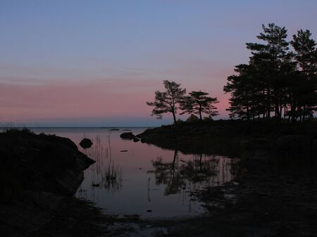 Outlines of trees and pink evening sky in Vita Sannar, Sweden.
