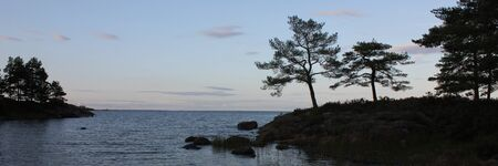 Old trees growing at the shore of Lake Vanern, Sweden.