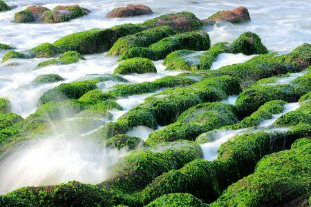 Seaweed and Spray