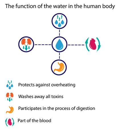 toxins: The function of the water in the human body