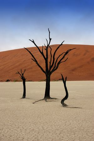 Dead trees in Deadvlei, desert of Namibia photo