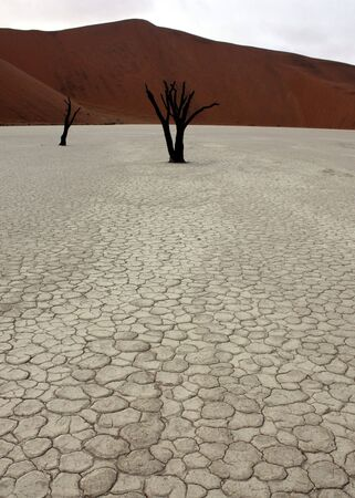 Dead trees in Deadvlei, desert of Namibia Stock Photo - 6429911