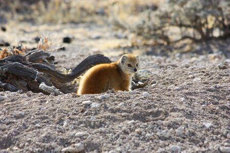 Namibian wild life, Etosha park, dry season photo