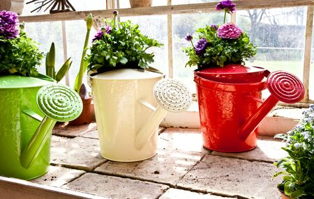 Watering cans, concept of gardening and hobby photo