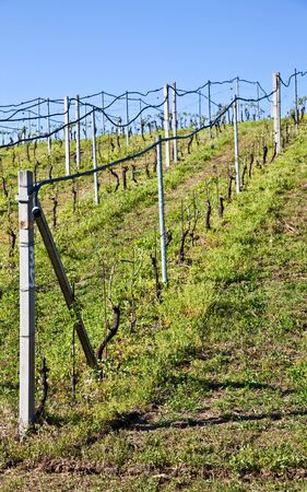 Vineyard with a drip irrigation system running along the top of the vines photo