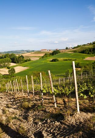 nebbiolo: Landscape of Monferrato area in Piedmont region - Italy