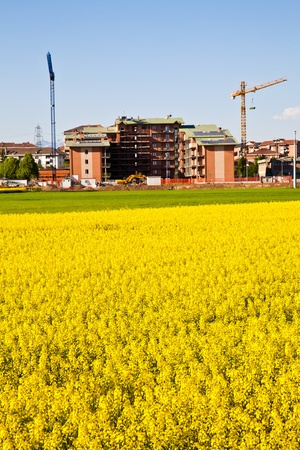 Field of yellow flowers in spring season close to the border of the city photo