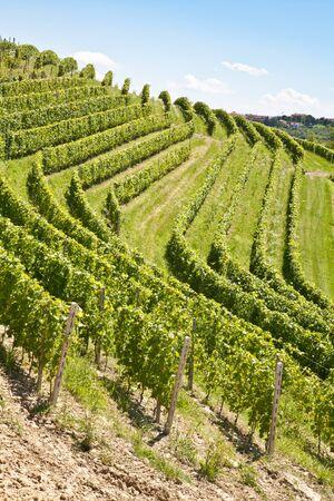 piedmont: Barbera vineyard during spring season, Monferrato area, Piedmont region, Italy Stock Photo