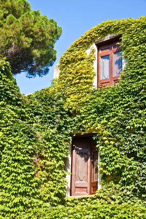 Italy - a Middle Age castle covered by ivy photo