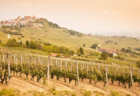 Tuscany. Vineyard in the middle of the most famous wine region of Italy. photo
