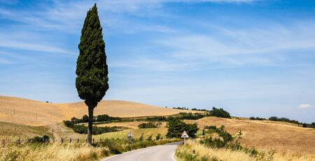 asciano: Italy, Tuscany; a road in the middle of the country, close to Asciano