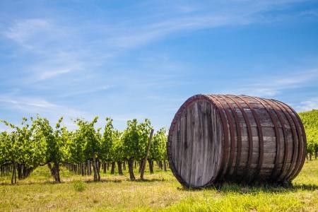 chianti: Italy, Tuscany region,  Chianti area. Chianti wineyard during a sunny day of summer Stock Photo