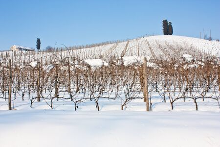 wineyard: Unusual image of a wineyard in Tuscany  Italy  during winter time
