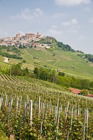 orcia: Tuscany. Vineyard in the middle of the most famous wine region of Italy.