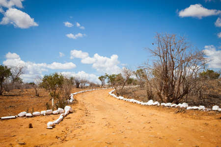 savana: Kenya. Blue sky on this orange road in the middle of African Savana, Tsavo East National Park
