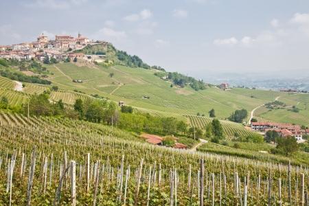 Toscane. Wijngaard in het midden van de beroemdste wijnstreek van Italië.