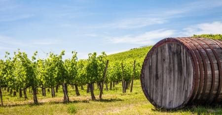 イタリア、トスカーナ、キャンティ エリア。夏の晴れた日の間にキャンティ ワインヤード 写真素材