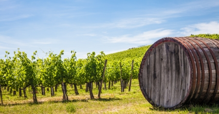 Italy, Tuscany region,  Chianti area. Chianti wineyard during a sunny day of summer Imagens