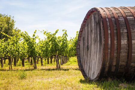 Italy, Tuscany region,  Chianti area. Chianti wineyard during a sunny day of summer Stock Photo