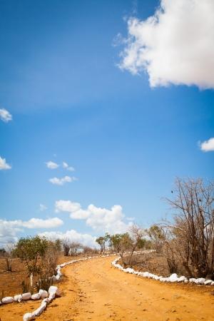 savana: Kenya. Blue sky on this orange road in the middle of African Savana, Tsavo East National Park