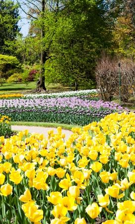 Villa Taranto - Italy. Famous Italian garden with a dedicated area for tulips cultivation. Stock Photo - 20612603