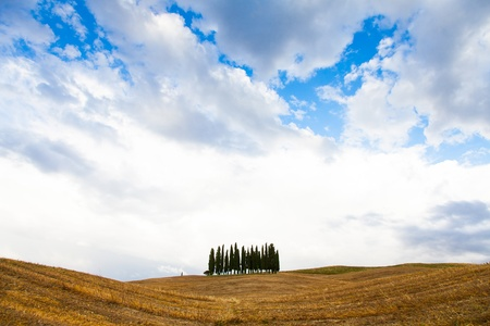San Quirico, dOrcia, Tuscany. A group of cypresses just before the storm arrival photo