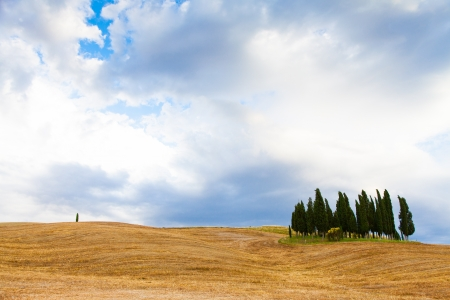 San Quirico, dOrcia, Tuscany. A group of cypresses just before the storm arrival