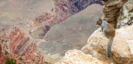 Unusual Grand Canyon view with a groud squirrel on foreground photo