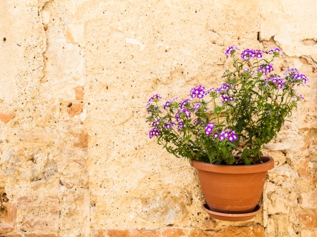 Pienza, Tuscany region, Italy. Old wall with flowers photo