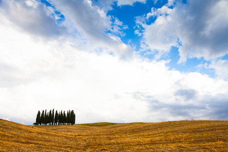 quirico: San Quirico, dOrcia, Tuscany. A group of cypresses just before the storm arrival