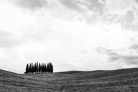 san quirico dorcia: San Quirico, dOrcia, Tuscany. A group of cypresses just before the storm arrival