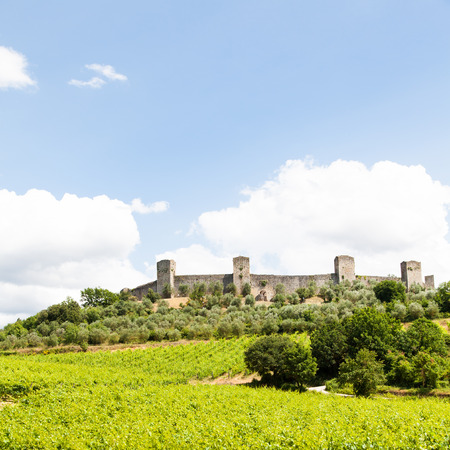 wineyard: Monteriggioni, Tuscany region, Italy. Wineyard in front of the ancient medieval walls