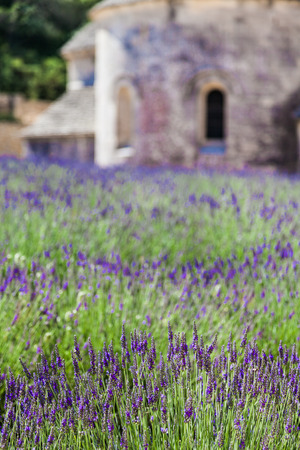 abbaye: France, Provence Region, Senanque Abbey. Lavander field in summer season.