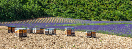 lavander: Provence, South France. Beehive dedicated to lavander honey production. Stock Photo