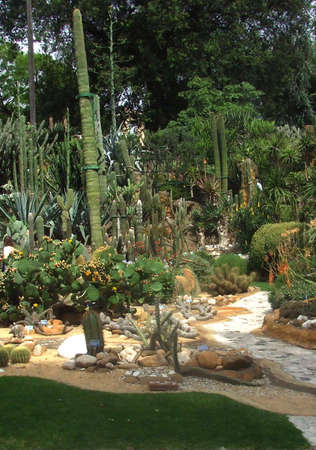 types of cactus: A very tall cactus and other kind of cactus and succulent plants