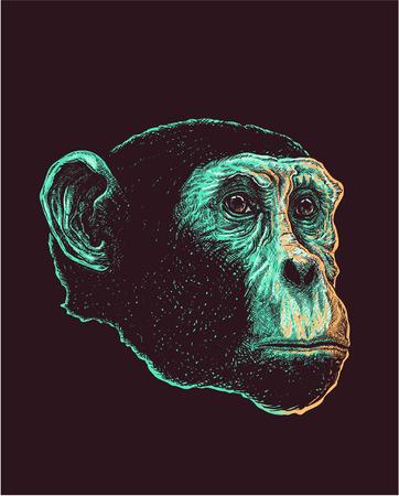 gazing: Vector illustration of chimp head