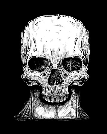 Vector illustration of skull