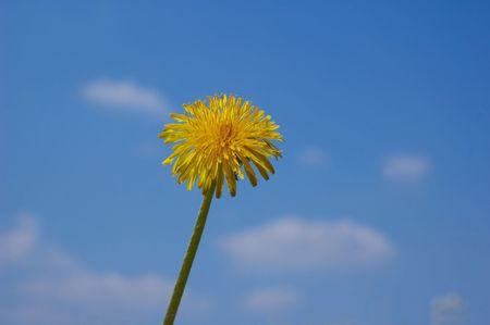 yelow: yelow flower