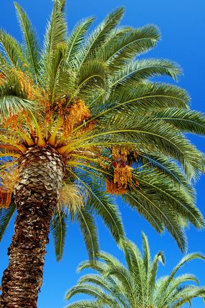 Palm tree Stock Photo - 3198070