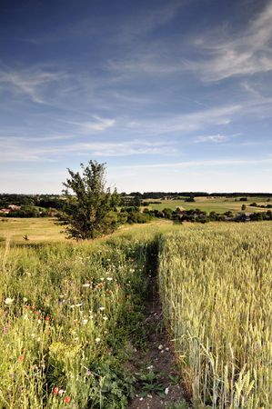 View across cornfield agricultural landscape Stock Photo - 3264975