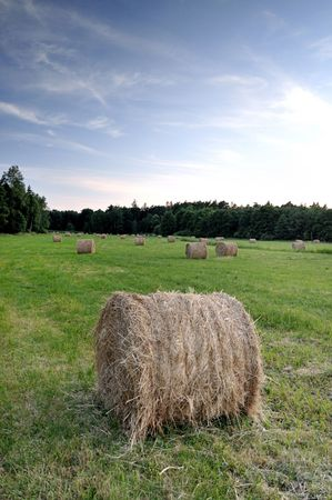 Bales of hay in a sloping field. Stock Photo - 3264971