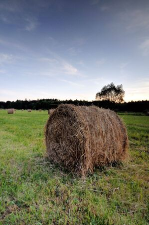 Bales of hay in a sloping field. Stock Photo - 3264972