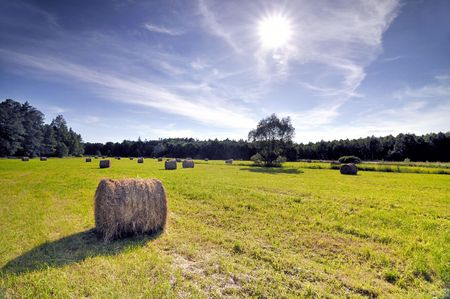 Bales of hay in a sloping field.