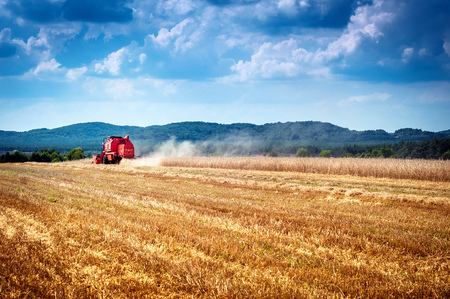 corn field: combine harvester working on a corn field