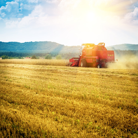 agriculture machinery: combine harvester working on a corn field