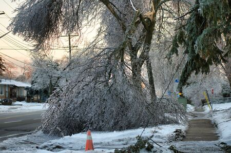 Frozen tree collapses and takes down power lines. This photo was taken after the 2013 ice storm in Toronto which result in a major power outage that lasted several days. Imagens