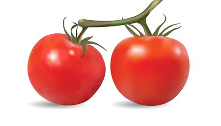 Tomatoes On The Vine, Vector, Illustration, Eps File Illustration