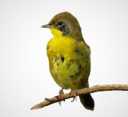 Colorful polygonal bird, Vector, Illustration, Eps File Illustration